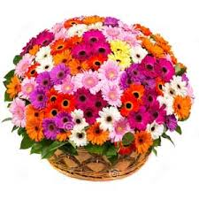 50 Mix Gerberas basket