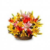Coloured Lilies in a basket