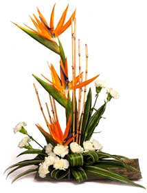 Arrangement of Bird of Paradise white carnations