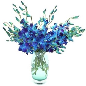 Vase of 10 Blue Orchids