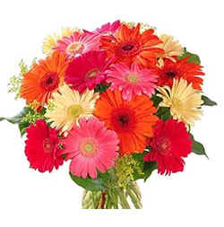 Two Dozen Gerberas bouquet