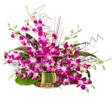 24 Orchids basket